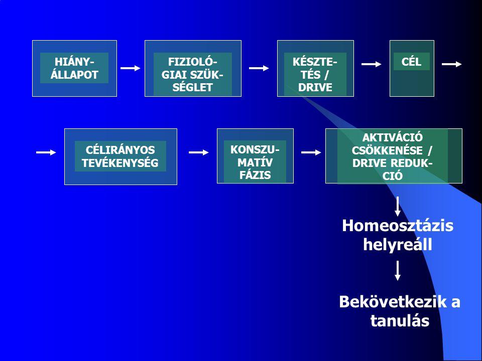 CÉLIRÁNYOS TEVÉKENYSÉG KONSZU- MATÍV FÁZIS AKTIVÁCIÓ CSÖKKENÉSE / DRIVE REDUK- CIÓ Homeosztázis helyreáll Bekövetkezik a tanulás HIÁNY- ÁLLAPOT FIZIOLÓ- GIAI SZÜK- SÉGLET KÉSZTE- TÉS / DRIVE CÉL