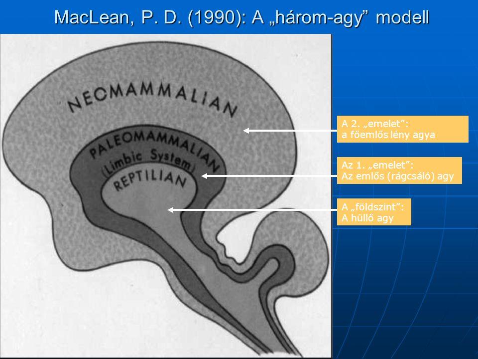 """MacLean, P. D. (1990): A """"három-agy"""" modell A 2. """"emelet"""": a főemlős lény agya Az 1. """"emelet"""": Az emlős (rágcsáló) agy A """"földszint"""": A hüllő agy"""