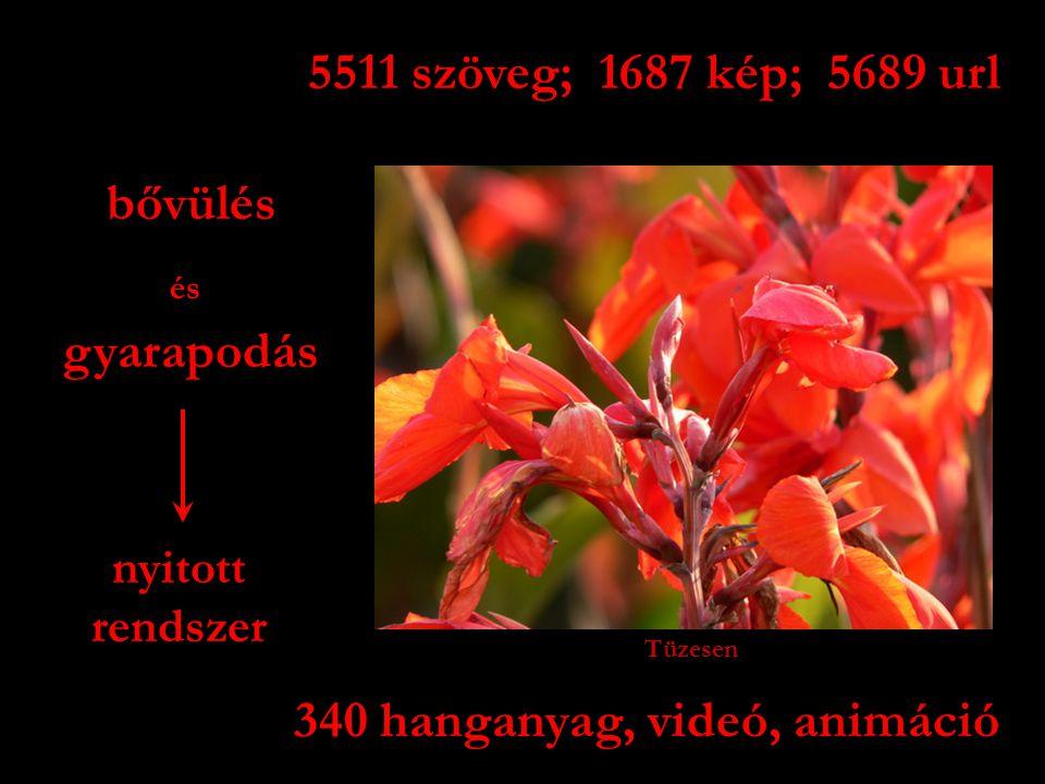 5511 szöveg; 1687 kép; 5689 url 340 hanganyag, videó, animáció gyarapodás bővülés nyitott rendszer és Tüzesen