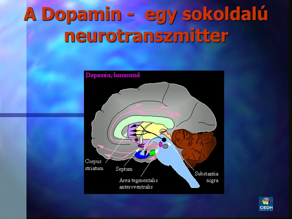 18 A Dopamin - egy sokoldalú neurotranszmitter