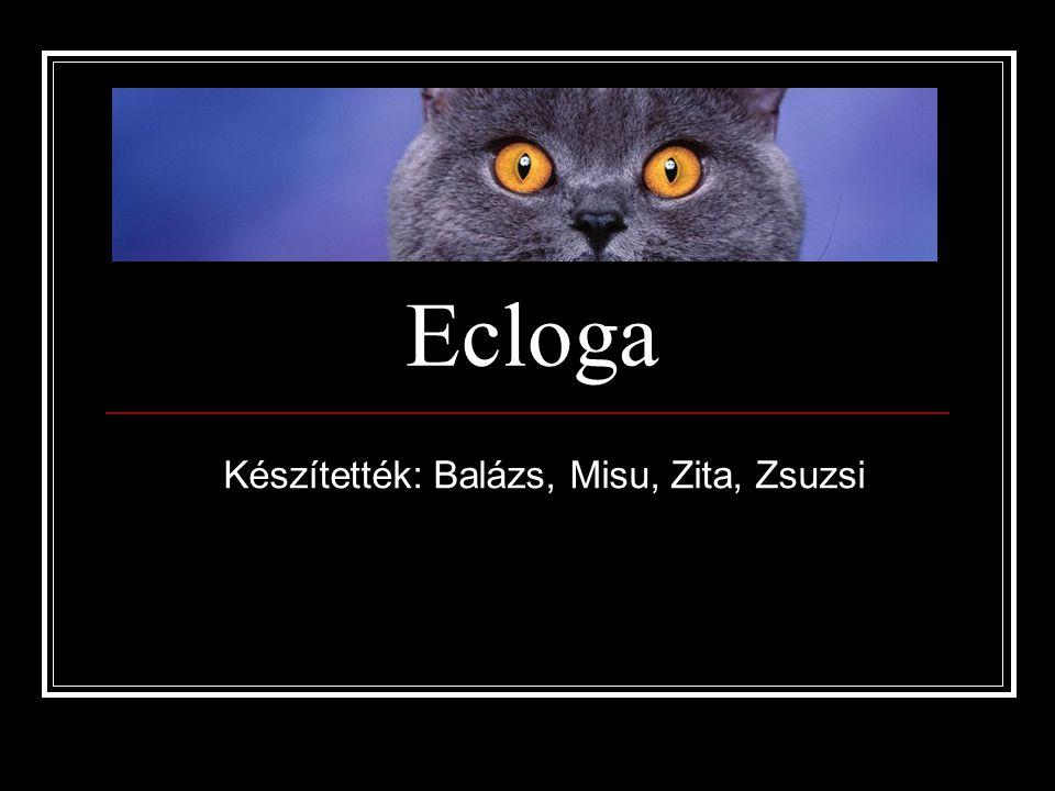 Ecloga Készítették: Balázs, Misu, Zita, Zsuzsi