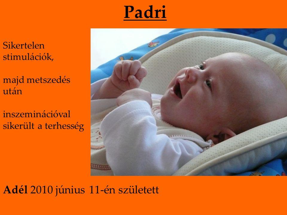 Padri Sikertelen stimulációk, majd metszedés után inszeminációval sikerült a terhesség Adél 2010 június 11-én született