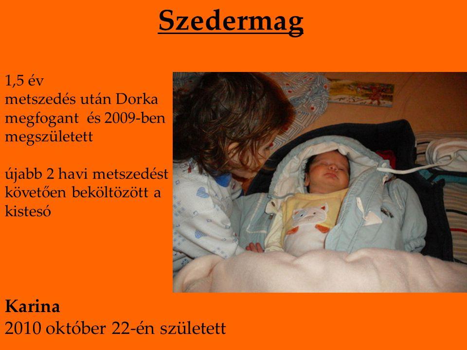 Szedermag 1,5 év metszedés után Dorka megfogant és 2009-ben megszületett újabb 2 havi metszedést követően beköltözött a kistesó Karina 2010 október 22-én született