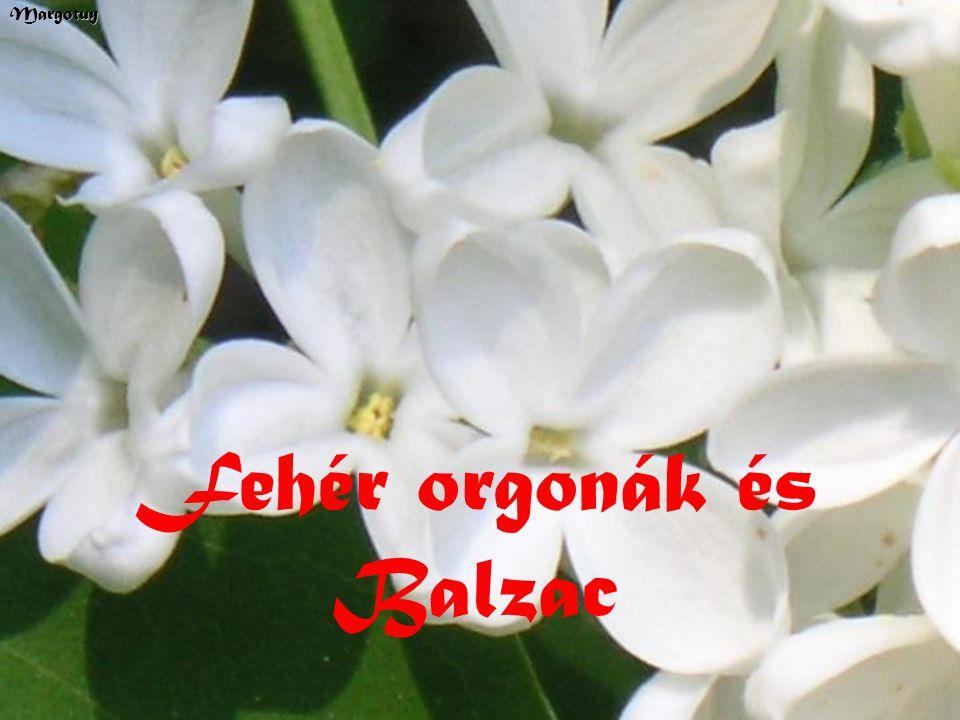 Fehér orgonák és BalzacMargotuy