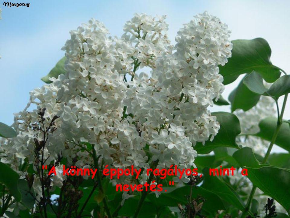 Az élet nagy fordulatai közepette lelkünk erősen kapcsolódik azokhoz a helyekhez, ahol öröm ér bennünket, vagy bánat szakad reánk. Margotuy
