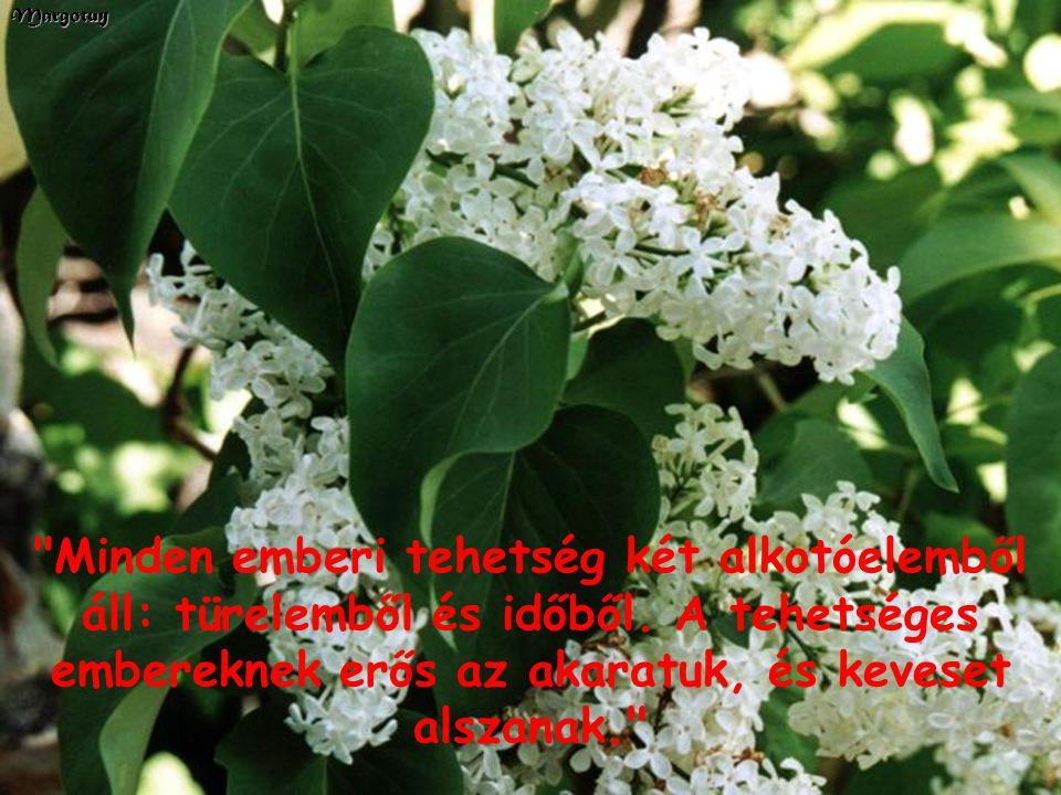 ...irtózom a csúfolódástól: elfonnyasztja a szívet, és megdermeszti az érzelmeket... Margotuy