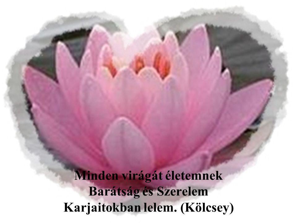 Minden virágát életemnek Barátság és Szerelem Karjaitokban lelem. (Kölcsey)
