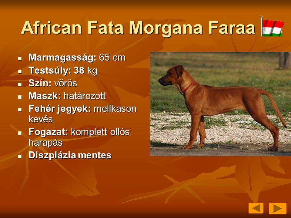 African Fata Morgana Faraa  Marmagasság: 65 cm  Testsúly: 38 kg  Szín: vörös  Maszk: határozott  Fehér jegyek: mellkason kevés  Fogazat: komplet