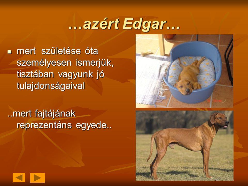 …azért Edgar…  mert születése óta személyesen ismerjük, tisztában vagyunk jó tulajdonságaival..mert fajtájának reprezentáns egyede..