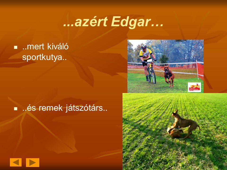 ...azért Edgar…  ..mert kiváló sportkutya..  ..és remek játszótárs..