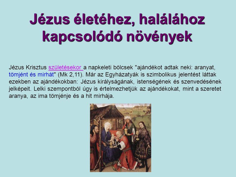 Jézus életéhez, halálához kapcsolódó növények Jézus Krisztus születésekor a napkeleti bölcsek ajándékot adtak neki: aranyat, tömjént és mirhát (Mk 2,11).