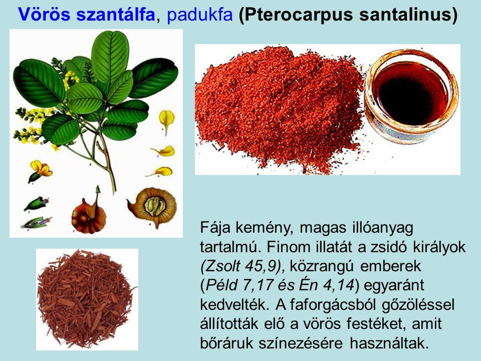 Vörös szantálfa, padukfa (Pterocarpus santalinus) Fája kemény, magas illóanyag tartalmú.