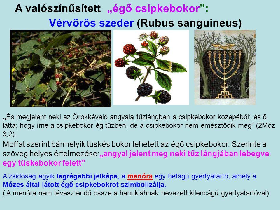 """Vérvörös szeder (Rubus sanguineus) A valószínűsített """"égő csipkebokor : Moffat szerint bármelyik tüskés bokor lehetett az égő csipkebokor."""