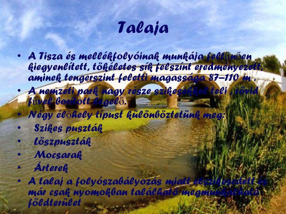 Talaja •A Tisza és mellékfolyóinak munkája felt ű n ő en kiegyenlített, tökéletes sík felszínt eredményezett, aminek tengerszint feletti magassága 87–110 m.