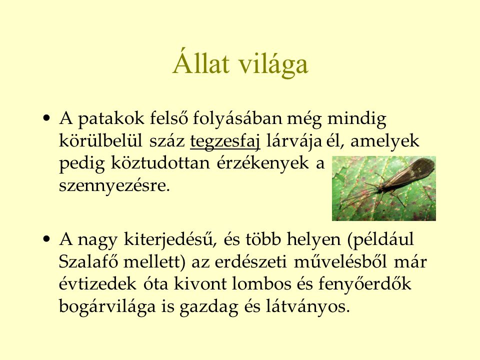 Állat világa •A patakok felső folyásában még mindig körülbelül száz tegzesfaj lárvája él, amelyek pedig köztudottan érzékenyek a szennyezésre. •A nagy