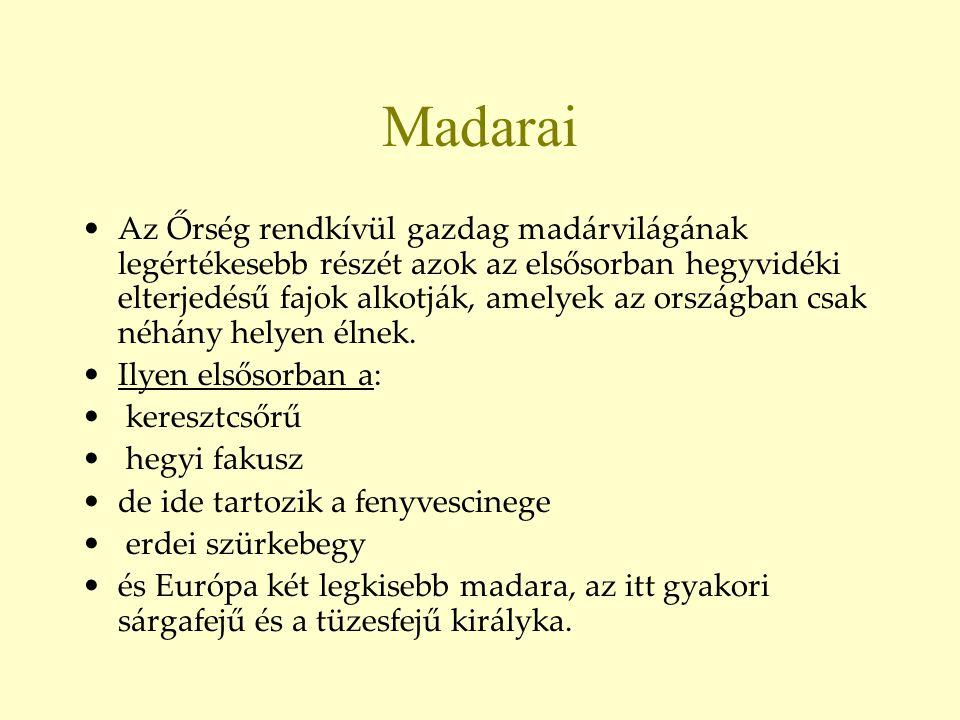 Madarai •Az Őrség rendkívül gazdag madárvilágának legértékesebb részét azok az elsősorban hegyvidéki elterjedésű fajok alkotják, amelyek az országban
