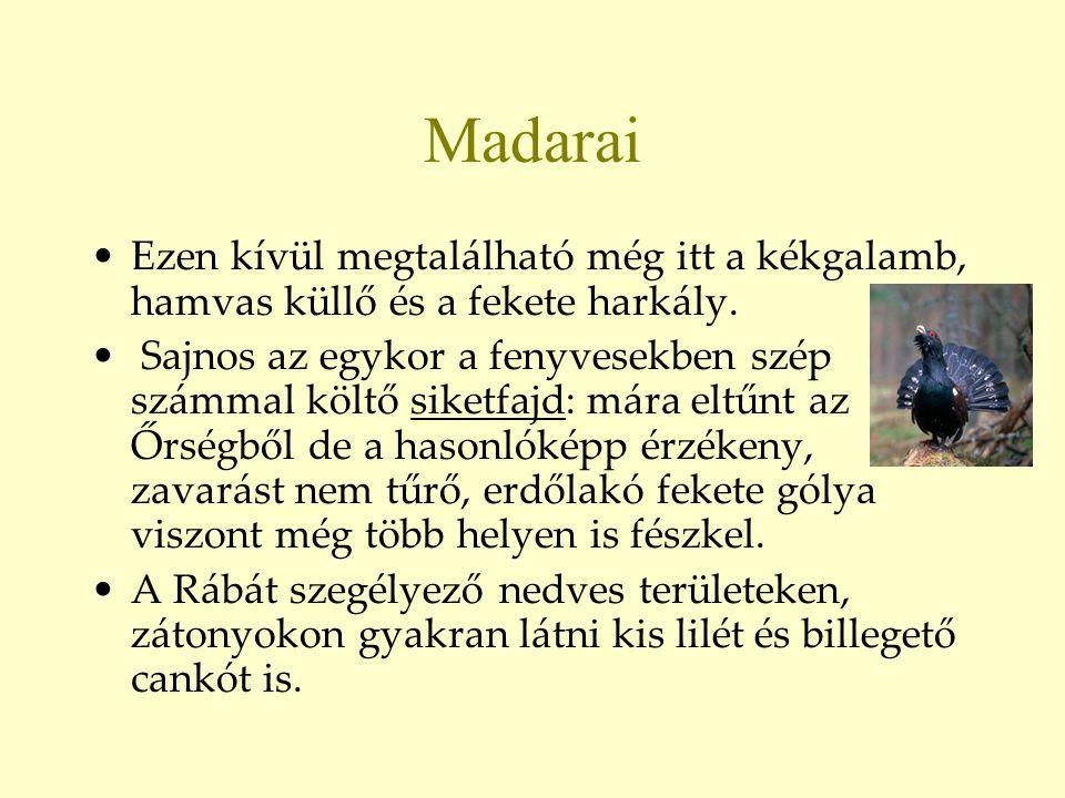 Madarai •Ezen kívül megtalálható még itt a kékgalamb, hamvas küllő és a fekete harkály. • Sajnos az egykor a fenyvesekben szép számmal költő siketfajd