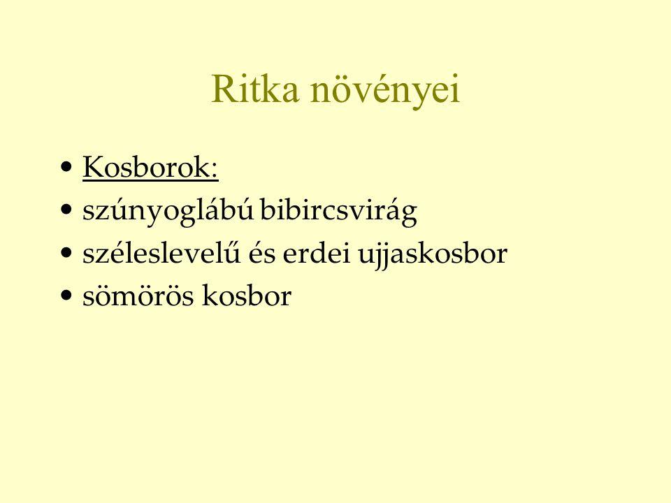 Ritka növényei •Kosborok : •szúnyoglábú bibircsvirág •széleslevelű és erdei ujjaskosbor •sömörös kosbor