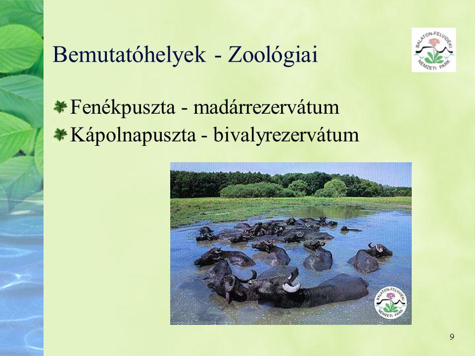 9 Bemutatóhelyek - Zoológiai Fenékpuszta - madárrezervátum Kápolnapuszta - bivalyrezervátum