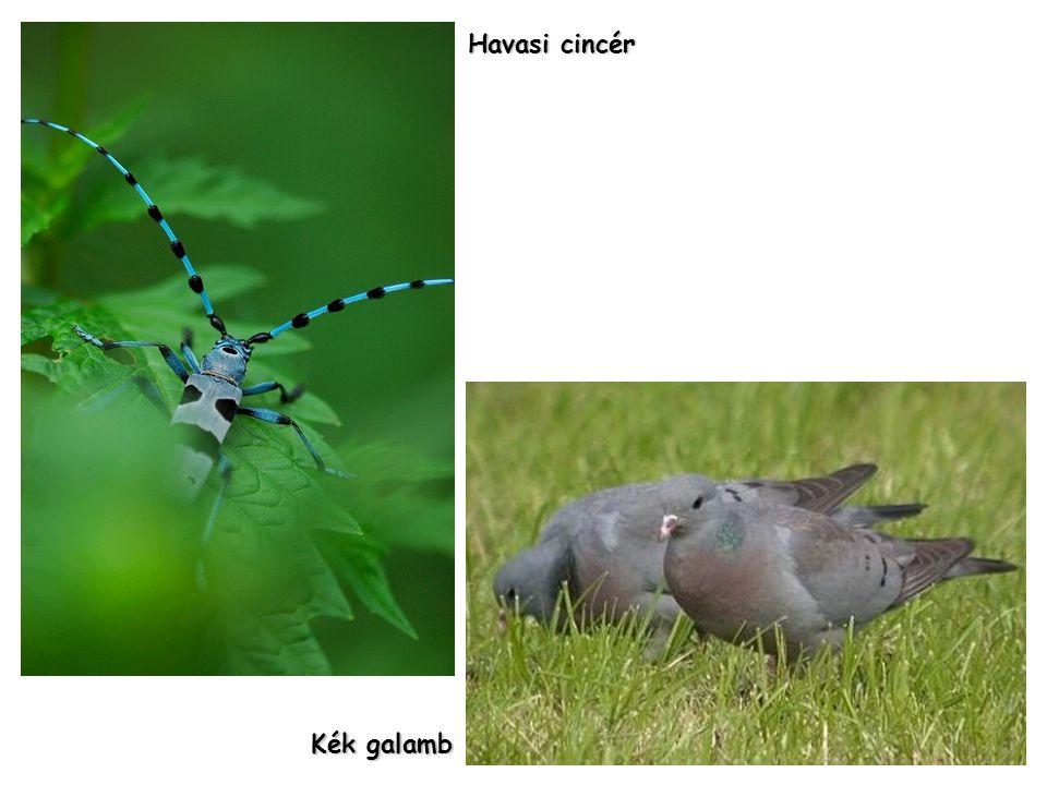 Piros madársisak Szirti páfrány