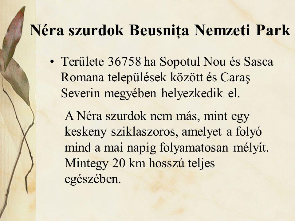 Néra szurdok Beusniţa Nemzeti Park •Területe 36758 ha Sopotul Nou és Sasca Romana települések között és Caraş Severin megyében helyezkedik el. A Néra