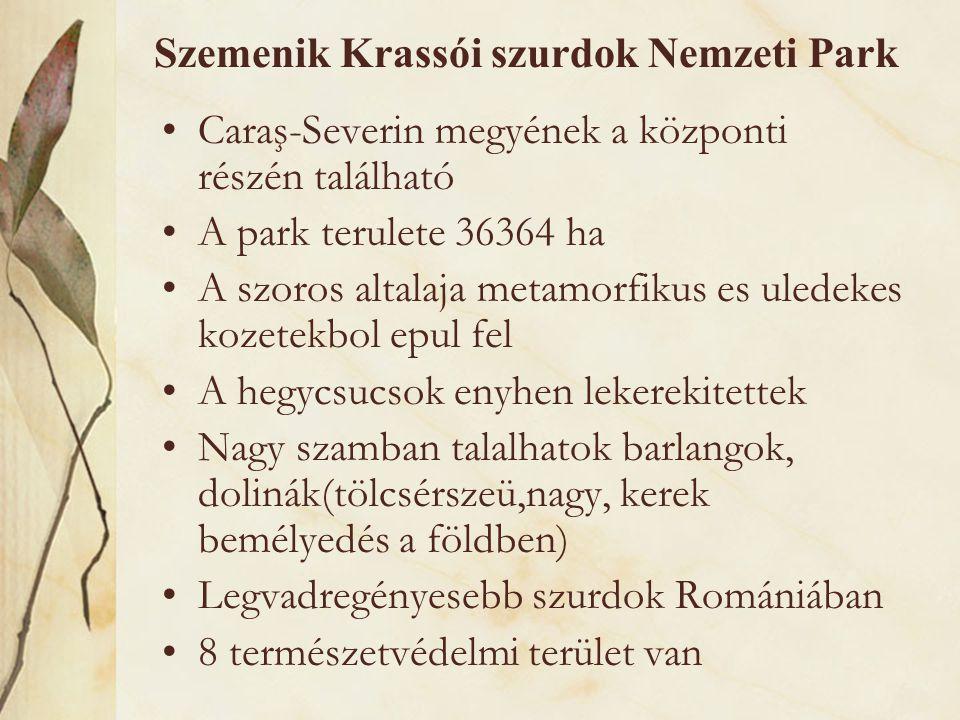 Szemenik Krassói szurdok Nemzeti Park •Caraş-Severin megyének a központi részén található •A park terulete 36364 ha •A szoros altalaja metamorfikus es