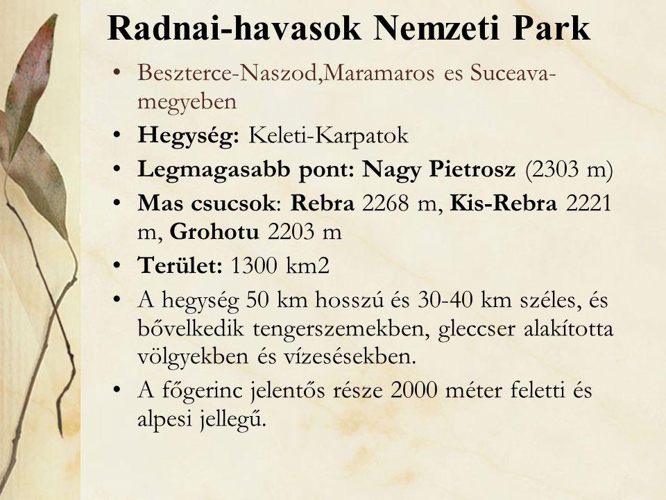 •Beszterce-Naszod,Maramaros es Suceava- megyeben •Hegység: Keleti-Karpatok •Legmagasabb pont: Nagy Pietrosz (2303 m) •Mas csucsok: Rebra 2268 m, Kis-R