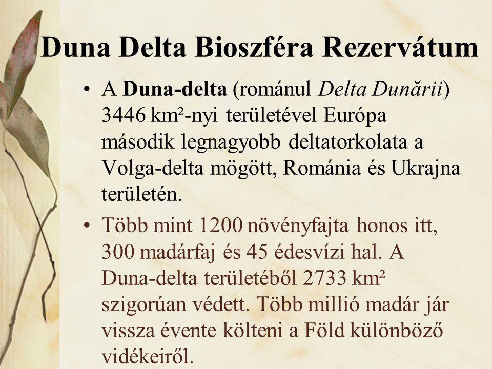 Duna Delta Bioszféra Rezervátum •A Duna-delta (románul Delta Dunării) 3446 km²-nyi területével Európa második legnagyobb deltatorkolata a Volga-delta