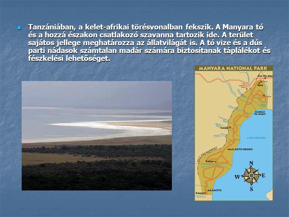  Tanzániában, a kelet-afrikai törésvonalban fekszik. A Manyara tó és a hozzá északon csatlakozó szavanna tartozik ide. A terület sajátos jellege megh
