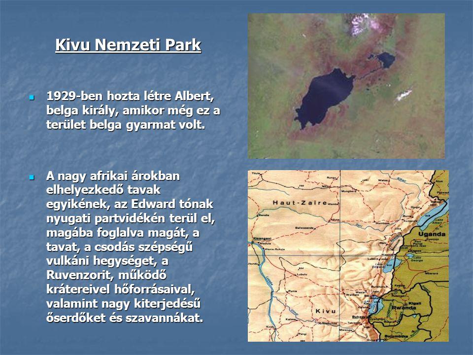 Kivu Nemzeti Park  1929-ben hozta létre Albert, belga király, amikor még ez a terület belga gyarmat volt.  A nagy afrikai árokban elhelyezkedő tavak