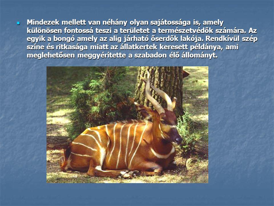  Mindezek mellett van néhány olyan sajátossága is, amely különösen fontossá teszi a területet a természetvédők számára. Az egyik a bongó amely az ali