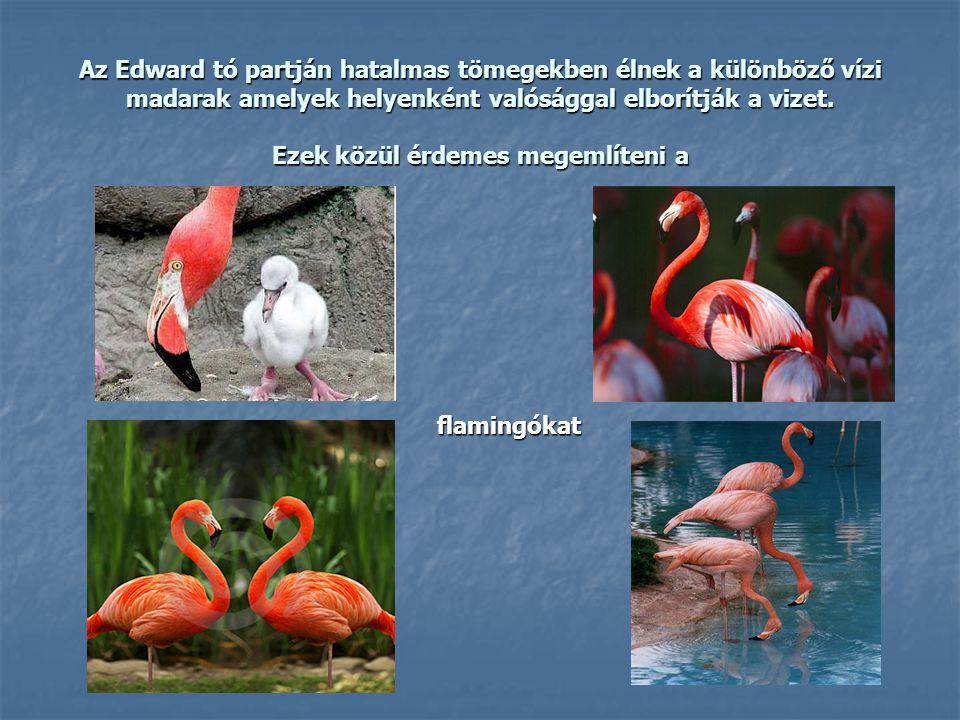 Az Edward tó partján hatalmas tömegekben élnek a különböző vízi madarak amelyek helyenként valósággal elborítják a vizet. Ezek közül érdemes megemlíte
