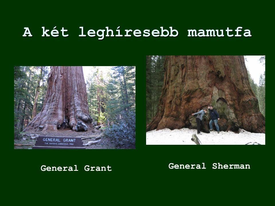 A két leghíresebb mamutfa General Grant General Sherman