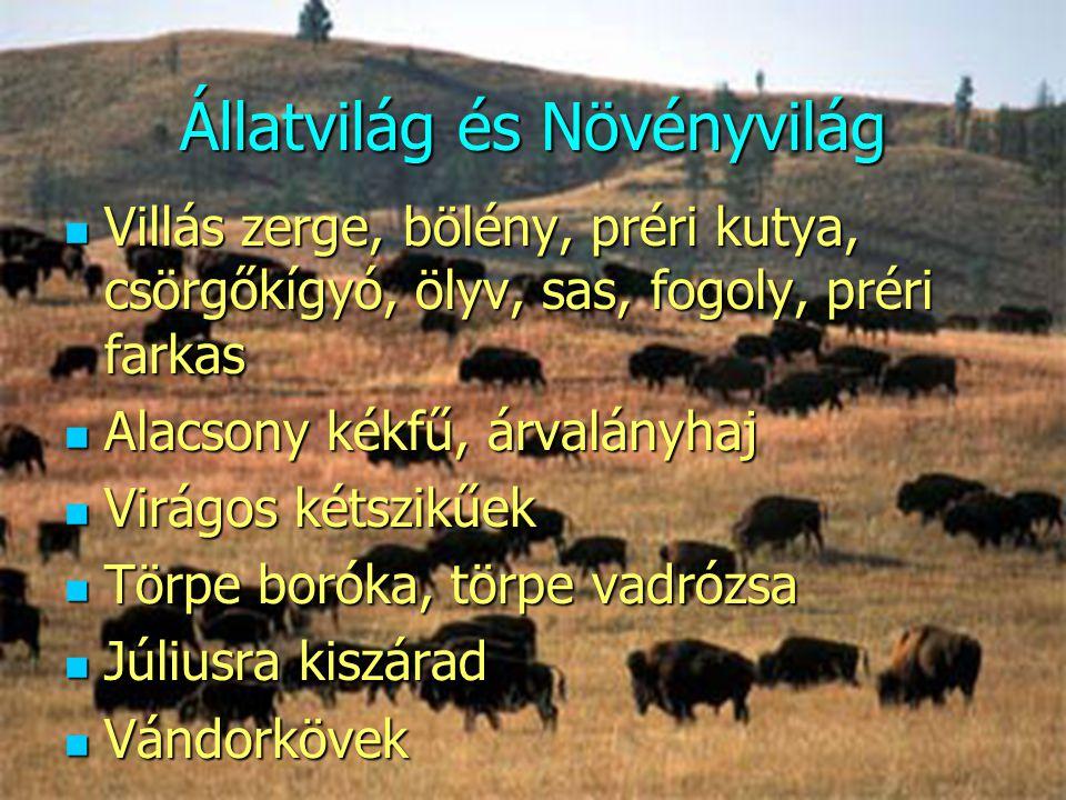 Állatvilág és Növényvilág  Villás zerge, bölény, préri kutya, csörgőkígyó, ölyv, sas, fogoly, préri farkas  Alacsony kékfű, árvalányhaj  Virágos ké