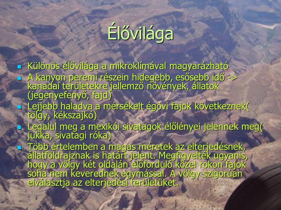 Élővilága  Különös élővilága a mikroklímával magyarázható  A kanyon peremi részein hidegebb, esősebb idő -> kanadai területekre jellemző növények, á