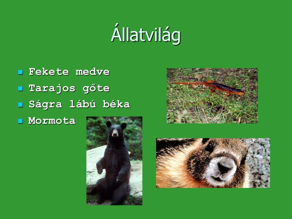 Állatvilág  Fekete medve  Tarajos gőte  Ságra lábú béka  Mormota