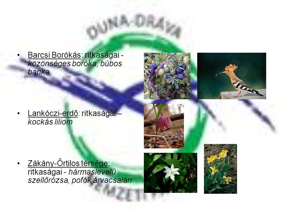 •Barcsi Borókás: ritkaságai - közönséges boróka, búbos banka •Lankóczi-erdő: ritkaságai – kockás liliom •Zákány-Őrtilos térsége: ritkaságai - hármasle