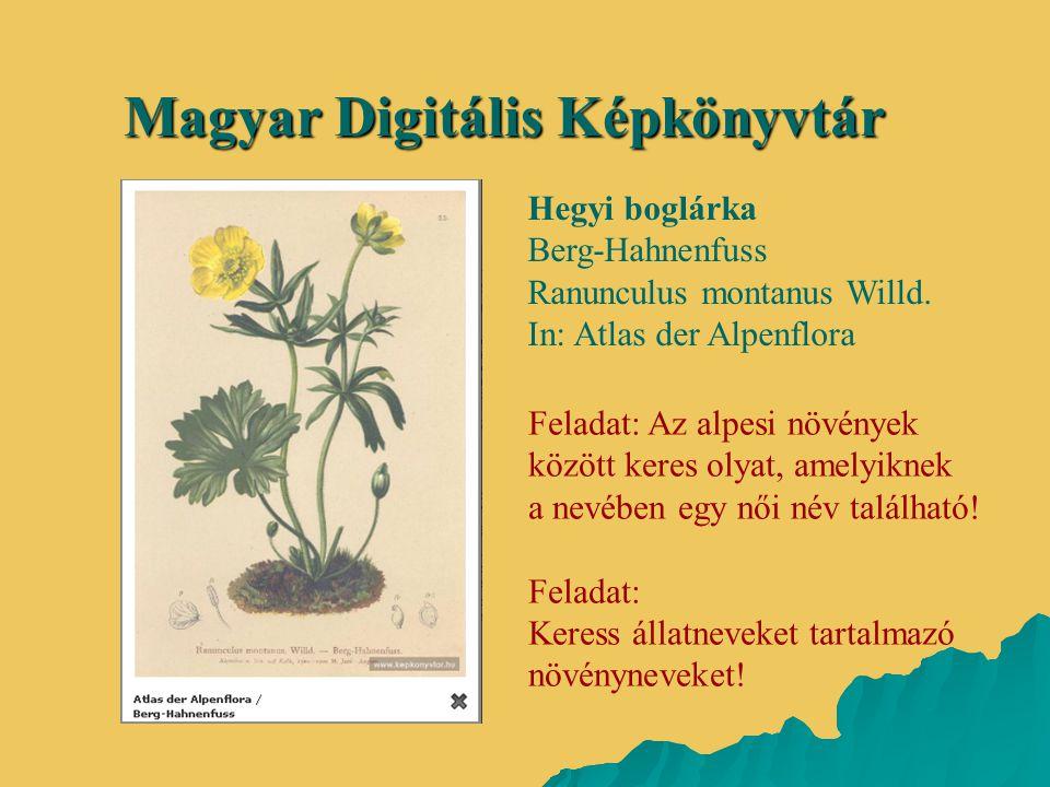 Magyar Digitális Képkönyvtár Hegyi boglárka Berg-Hahnenfuss Ranunculus montanus Willd. In: Atlas der Alpenflora Feladat: Az alpesi növények között ker