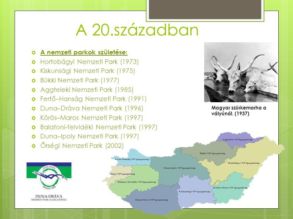 A 20.században  A nemzeti parkok születése:  Hortobágyi Nemzeti Park (1973)  Kiskunsági Nemzeti Park (1975)  Bükki Nemzeti Park (1977)  Aggteleki Nemzeti Park (1985)  Fertő–Hanság Nemzeti Park (1991)  Duna–Dráva Nemzeti Park (1996)  Körös–Maros Nemzeti Park (1997)  Balatoni-felvidéki Nemzeti Park (1997)  Duna–Ipoly Nemzeti Park (1997)  Őrségi Nemzeti Park (2002) Magyar szürkemarha a vályúnál.