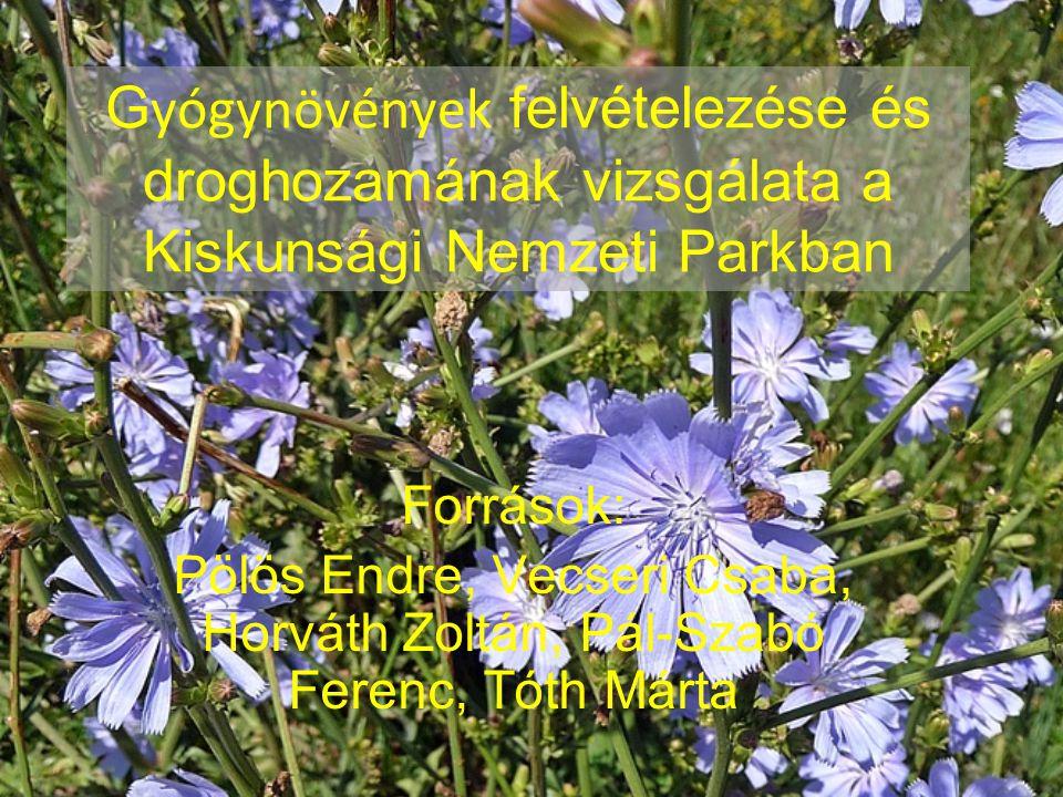 G yógynövények felvételezése és droghozamának vizsgálata a Kiskunsági Nemzeti Parkban Források: Pölös Endre, Vecseri Csaba, Horváth Zoltán, Pál-Szabó