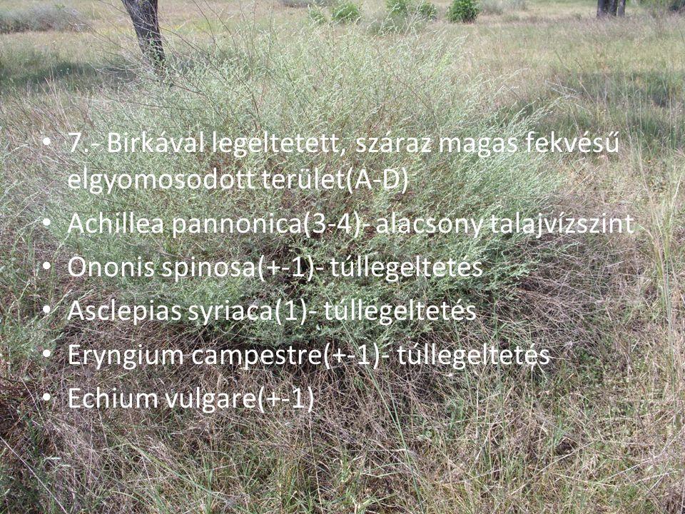 • 7.- Birkával legeltetett, száraz magas fekvésű elgyomosodott terület(A-D) • Achillea pannonica(3-4)- alacsony talajvízszint • Ononis spinosa(+-1)- t