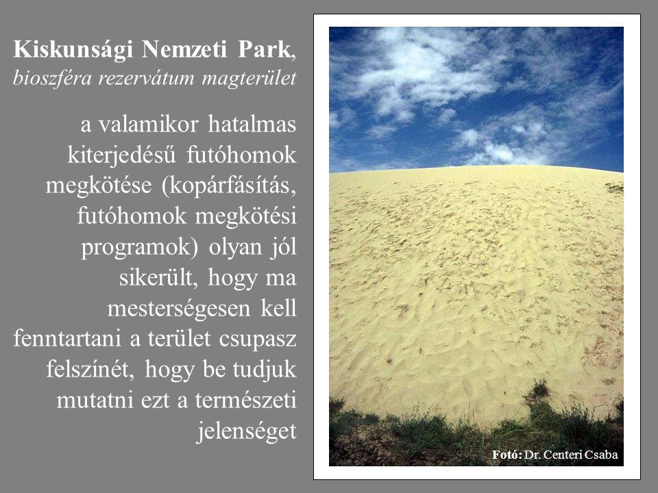 Fotó: Dr. Centeri Csaba Kiskunsági Nemzeti Park, bioszféra rezervátum magterület a valamikor hatalmas kiterjedésű futóhomok megkötése (kopárfásítás, f