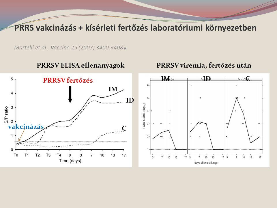 PRRS vakcinázás + kísérleti fertőzés laboratóriumi környezetben Martelli et al., Vaccine 25 (2007) 3400-3408.