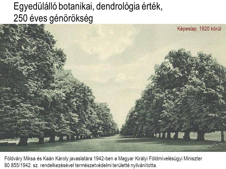 Egyedülálló botanikai, dendrológia érték, 250 éves génörökség Képeslap, 1920 körül Földváry Miksa és Kaán Károly javaslatára 1942-ben a Magyar Királyi Földmívelésügyi Miniszter 80.855/1942.