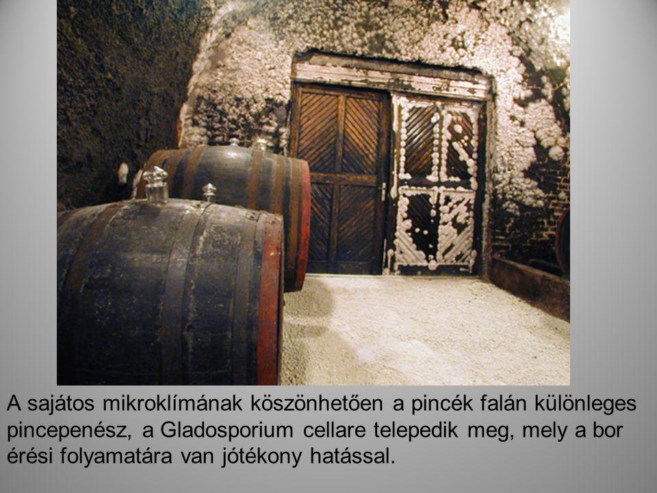 . A sajátos mikroklímának köszönhetően a pincék falán különleges pincepenész, a Gladosporium cellare telepedik meg, mely a bor érési folyamatára van j