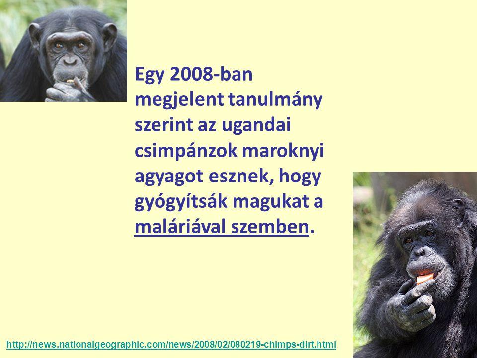 Egy 2008-ban megjelent tanulmány szerint az ugandai csimpánzok maroknyi agyagot esznek, hogy gyógyítsák magukat a maláriával szemben.