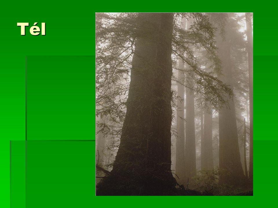 Magyar vonatkozások  A sequoia nevet 1847-ben Endlicher István adta, ezzel fejezve ki tiszteletét Seh-Quoi-Ah irokéz főnök felé, aki a 86 szótagú irokéz írás megalkotója volt.