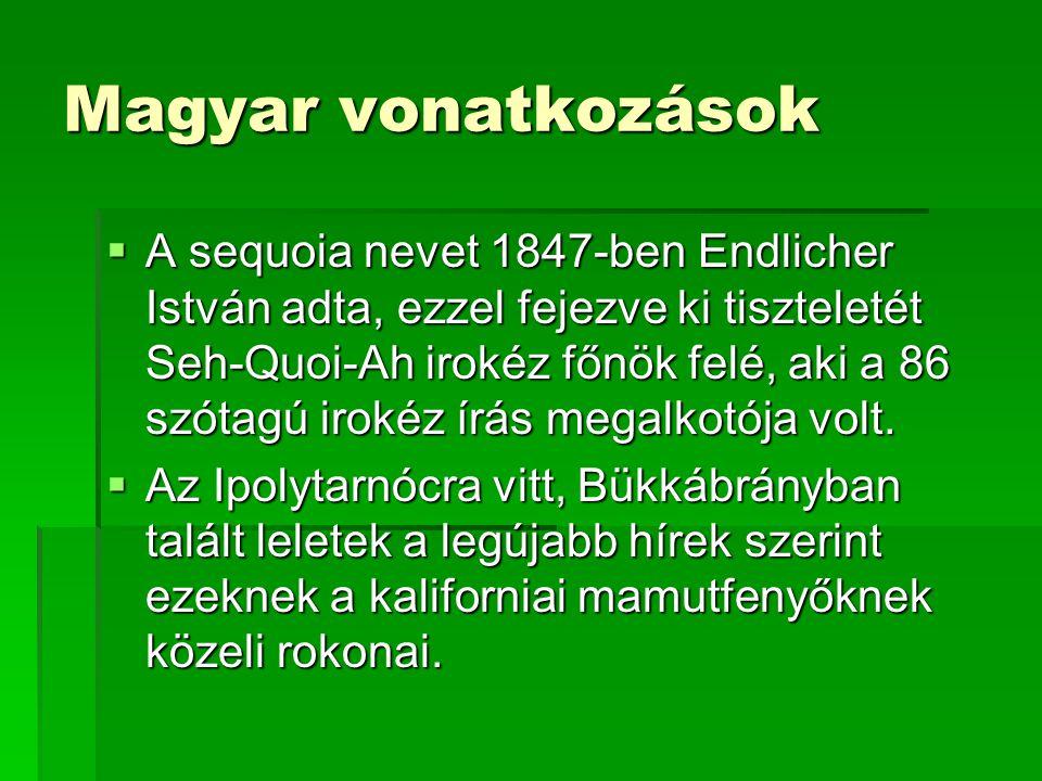 Az ipolytarnóci őslelet  1836, Kubinyi Ferenc birtokos: hídnak használt megkövesedett ősi fa  Rohamos pusztulás, ma már csak töredékei:  Fenőkő, építőkő, sírkő lett belőle  8 m kerületű, kb.