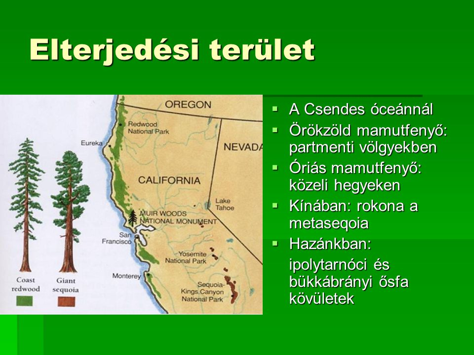 Néhány adat:  Örökzöld mamutfenyő a legmagasabb fa: 115,55 m magas 115,55 m magas  Óriás mamutfenyő a legnagyobb fa: 84,2 m magas, 1486 m 3 84,2 m magas, 1486 m 3  a legnagyobb kerületű fa: 17,4 m 17,4 m  a legnagyobb ágú fa: 3,9 m vastag faág 3,9 m vastag faág  a legvastagabb kérgű fa: ~ 1 m vastag kéreg ~ 1 m vastag kéreg