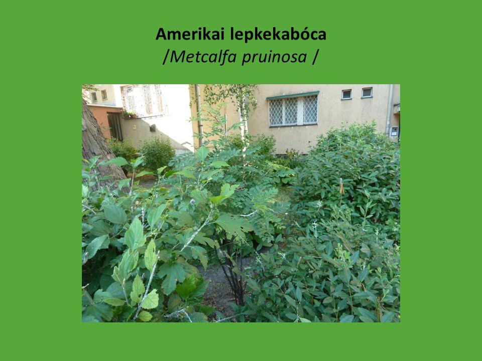 Közterületre engedélyezett növényvédő szerek: